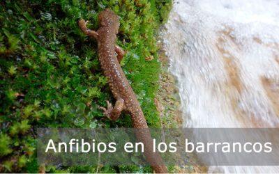 Anfibios en los descensos de barrancos Pirineos